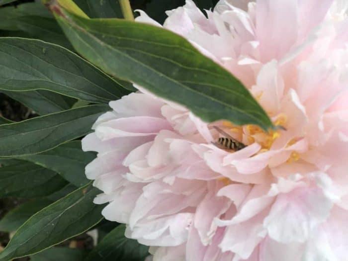 Wynyard Hall Gardens in the Summer