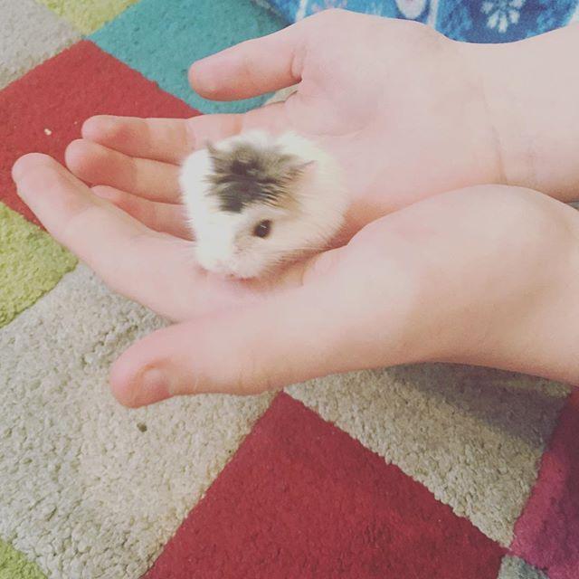 Meet Casper