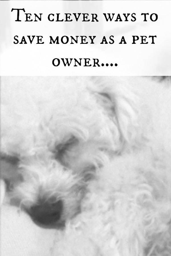Ten clever ways to save money as a pet owner....