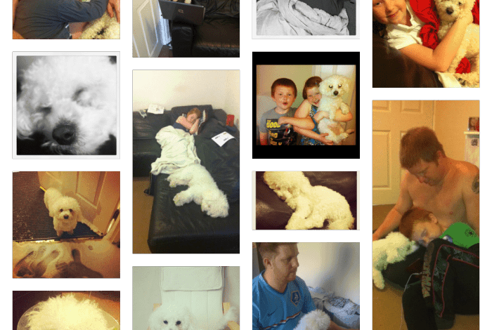 buddy-collage