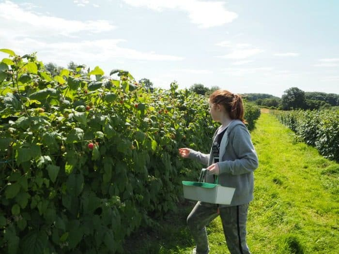 Why you should visit your local 'Pick Your Own' farm....
