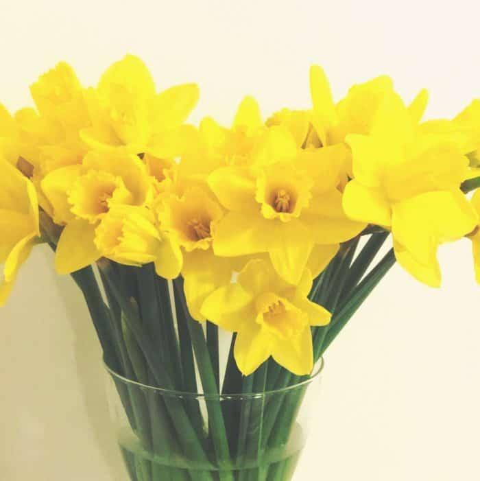 Bargain daffodils