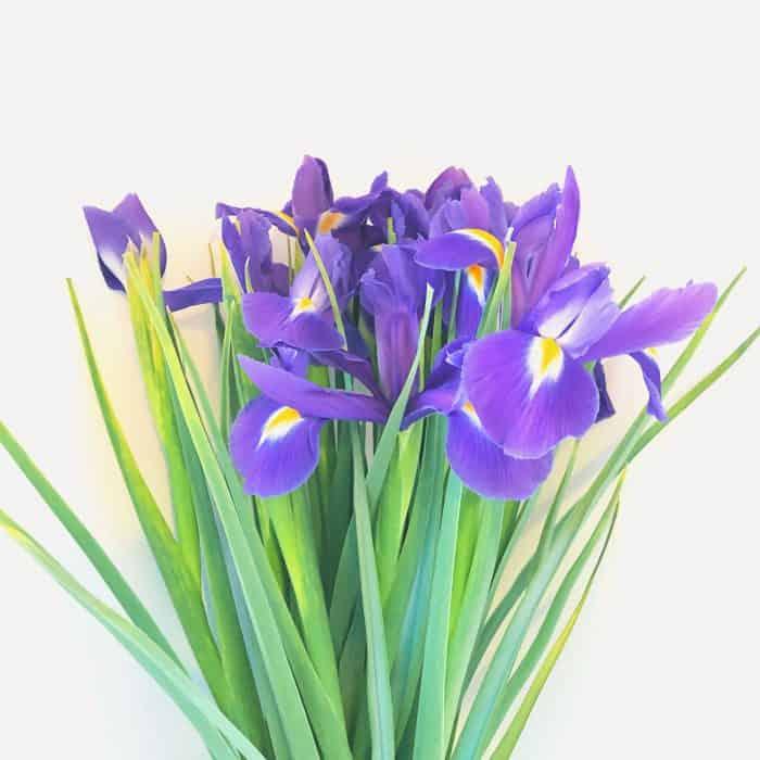 Bargain flowers
