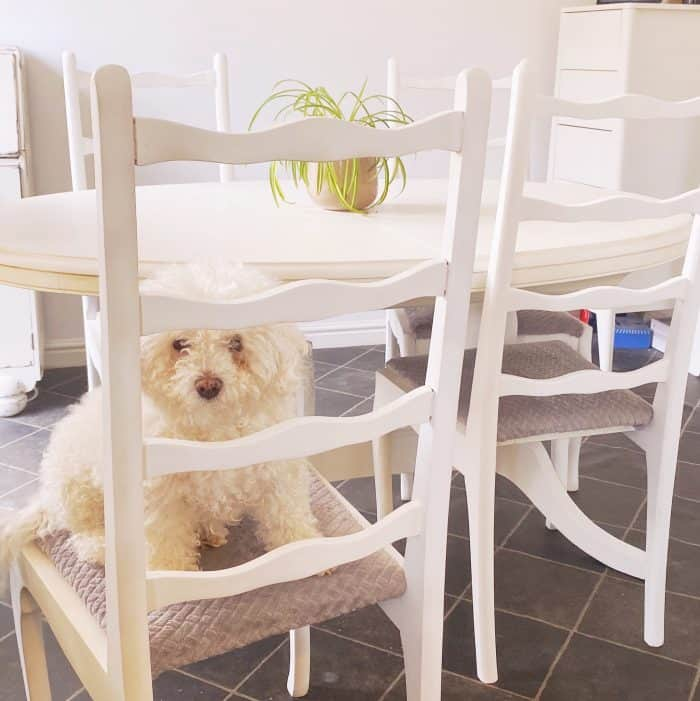 Have you ever wondered how to paint your dining room table? Here's what happened when I painted mine... #upcyle #thrifty #upcycling #furnituremakeover #frugalfamily # recycle