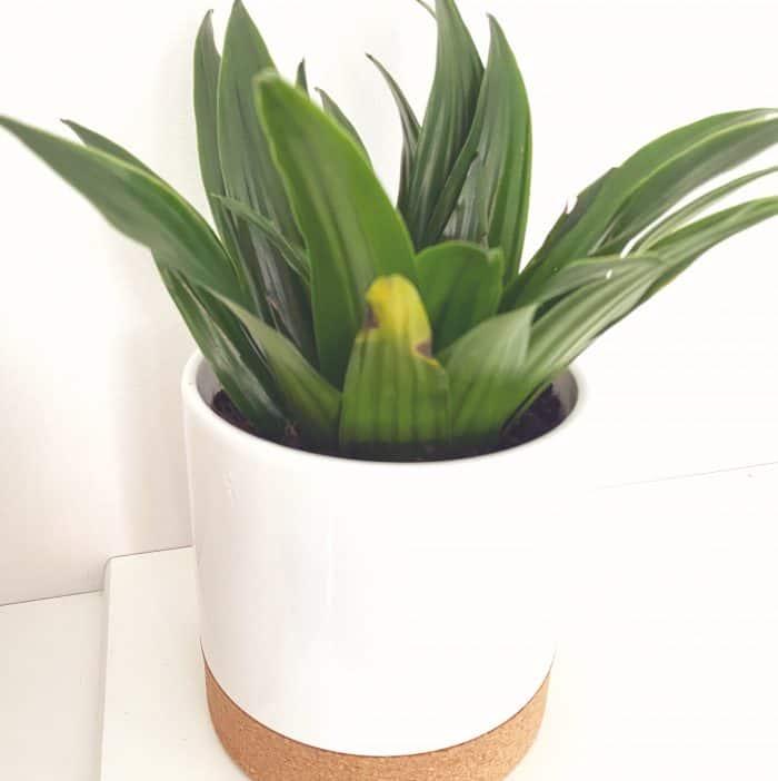 Non Bargain plant