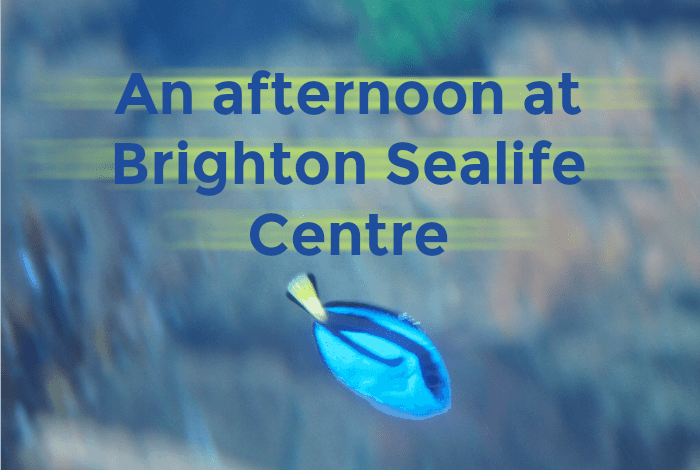 An afternoon at Brighton Sealife Centre