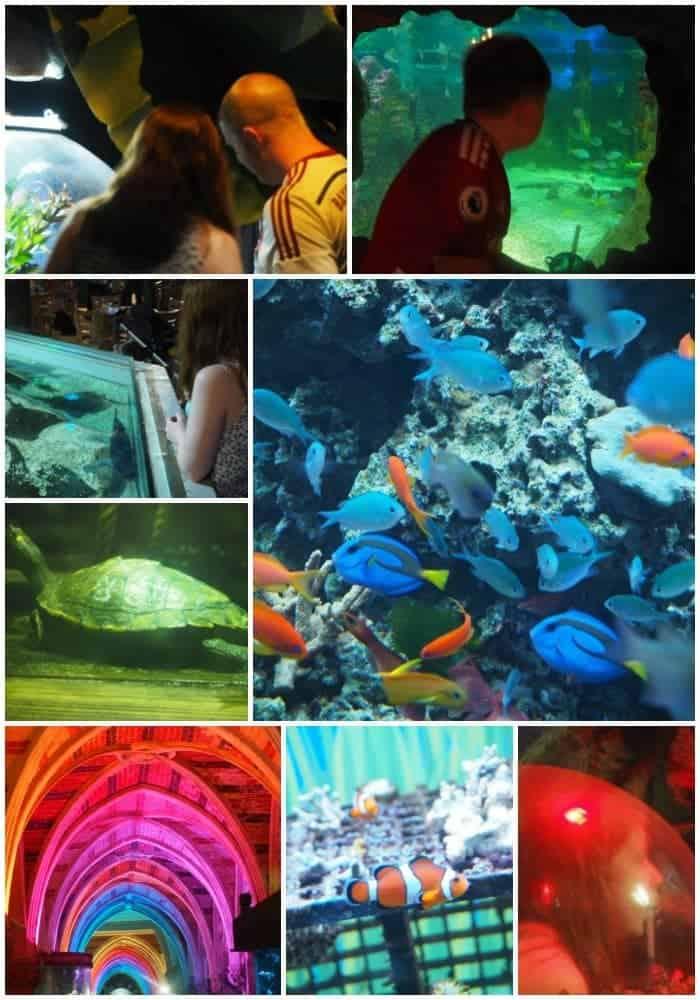Beautiful sealife centre