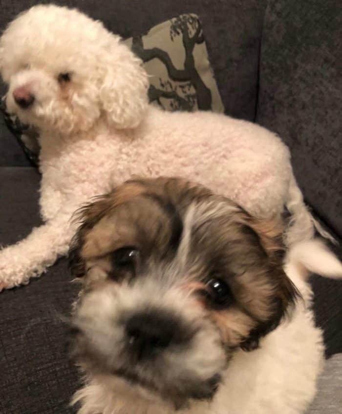 Buddy and Monty