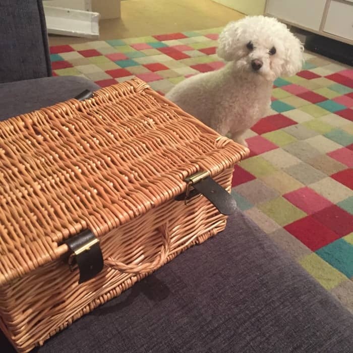 Buddy and the Wicker basket