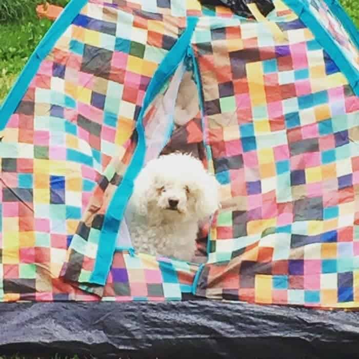 Buddy making sure the tent is suitable