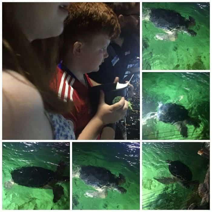Feeding the turtles
