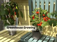 Greenhouse Growing - I need some advice....