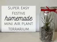 Festive Homemade Air Plant Terrarium (AKA a plant in a jam jar)...