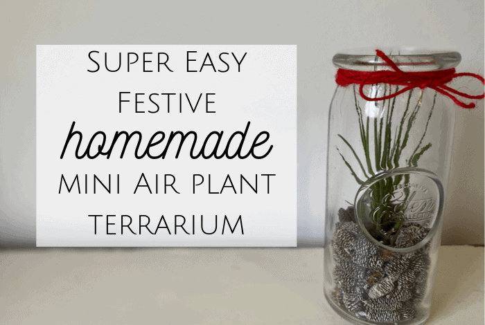 Homemade Air Plant Terrarium!