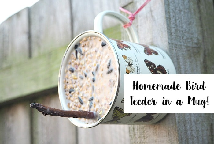 Homemade bird feeder in a mug.