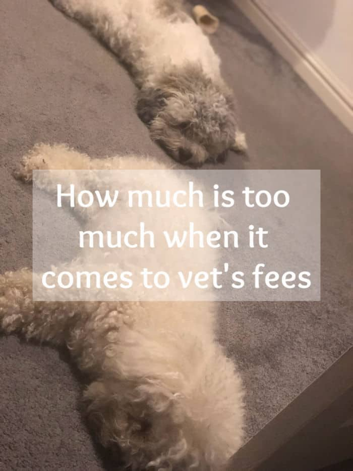 How much is too much when it comes to vet's fees
