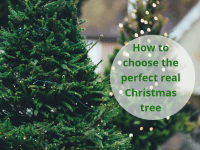 How to pick out the perfect real Christmas tree....