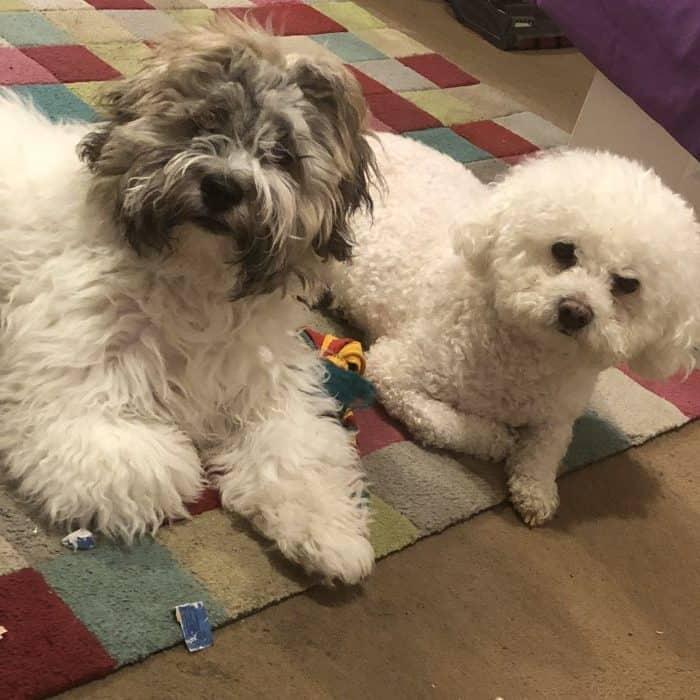 Monty and Buddy
