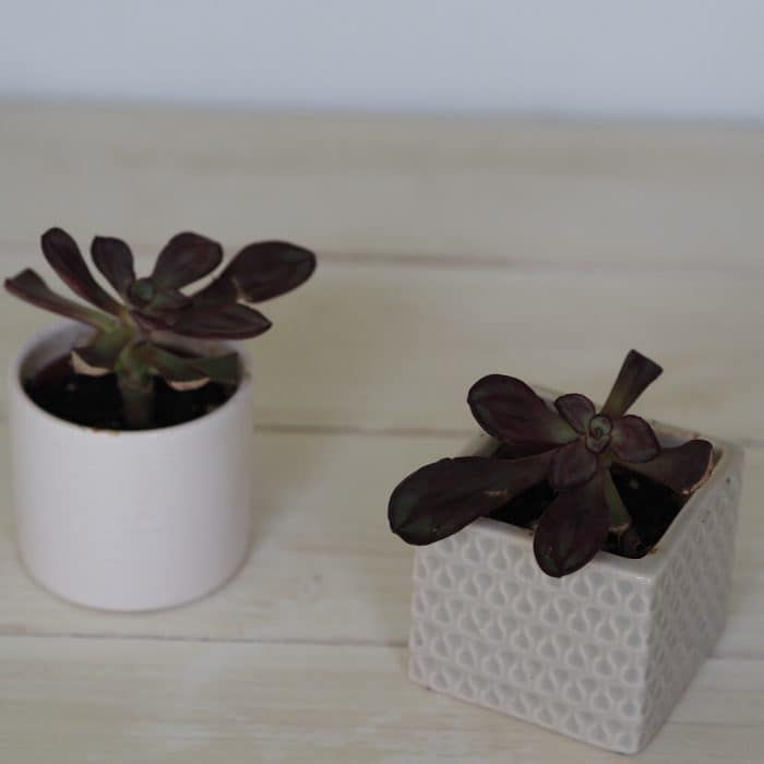Rescued plants