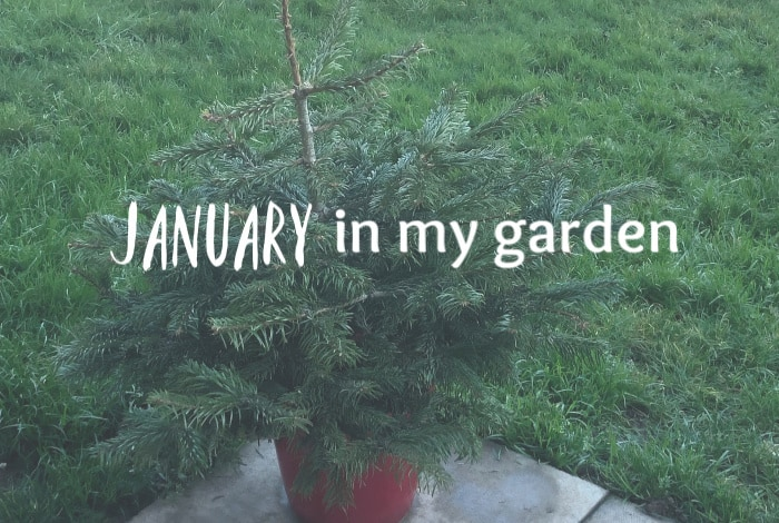 January in my garden