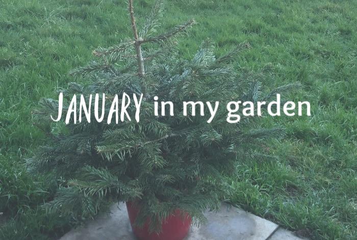 January in my garden