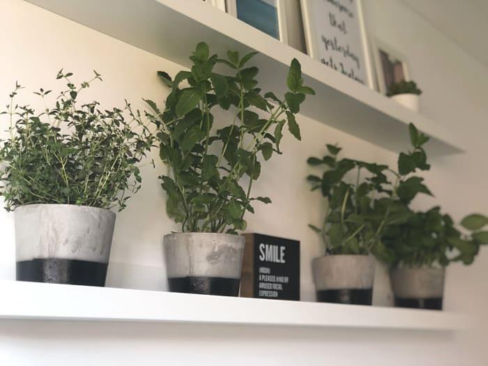Kitchen Garden Shelfie