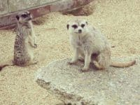 Family Days Out - Monkey Haven, Isle of Wight....