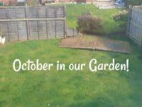 October in my garden....