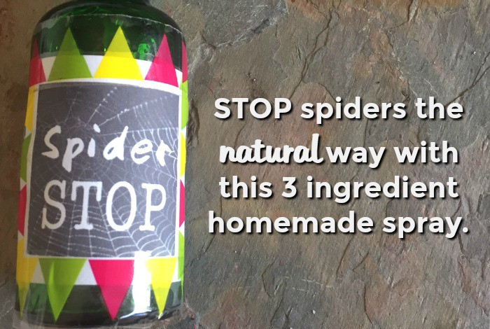 Stop spiders the natural way the diary of a frugal for How to stop spiders coming in your house