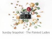Sunday Snapshot: The Inspiring Painted Ladies....