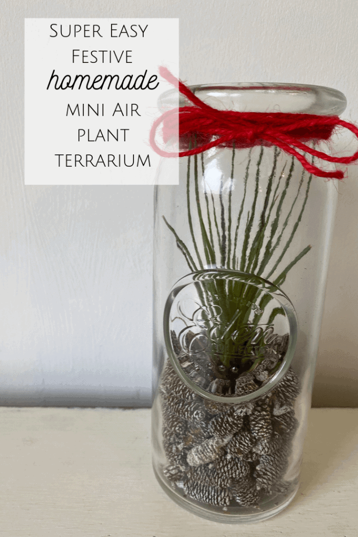 Super Easy Festive Homemade Air Plant Terrarium! #airplants #terrariumideas #diy #christmas