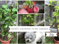 July in my garden....