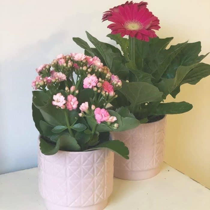 Bargain plant pots