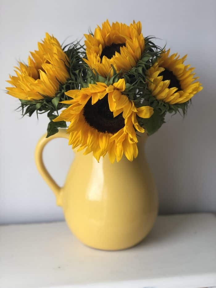 Amazing sunflowers reduced to £1