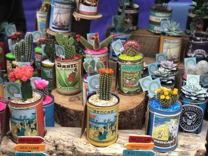 Amazing cacti and beautiful pots