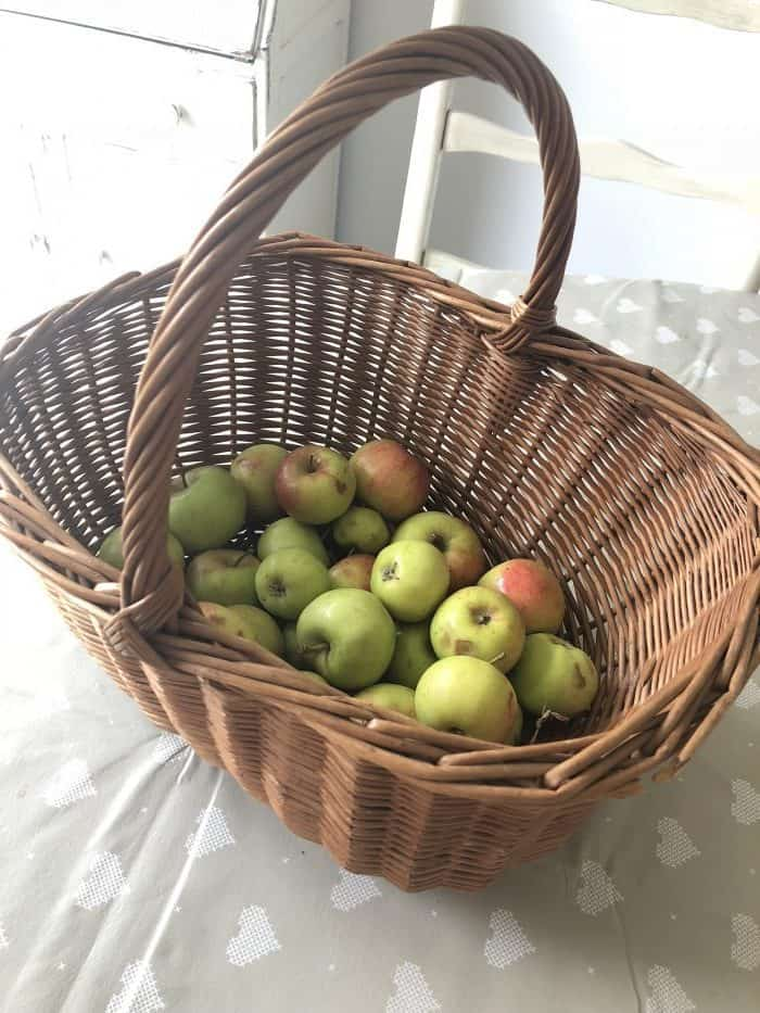 Amazing basket with some windfall apples