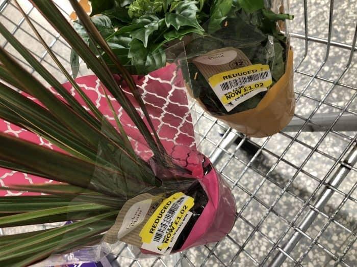 Bargain Plants