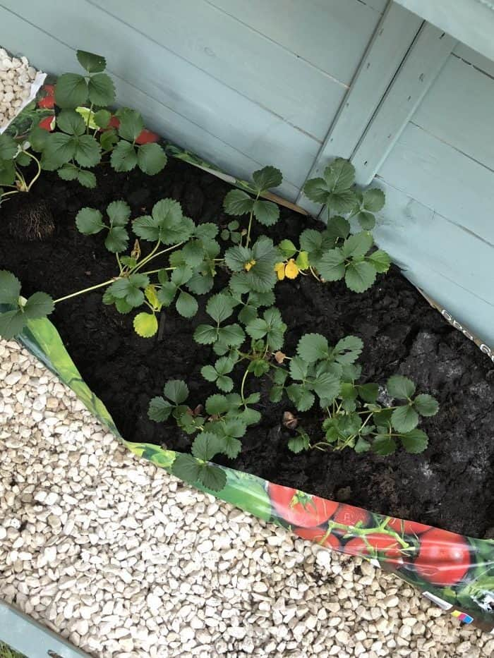My new Greenhouse
